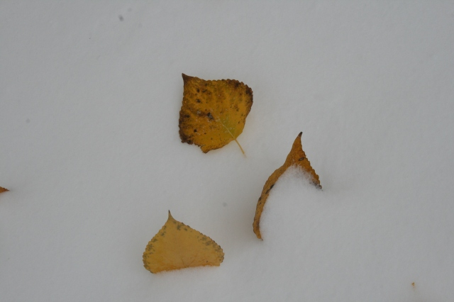 Fall leaves, wintry weather