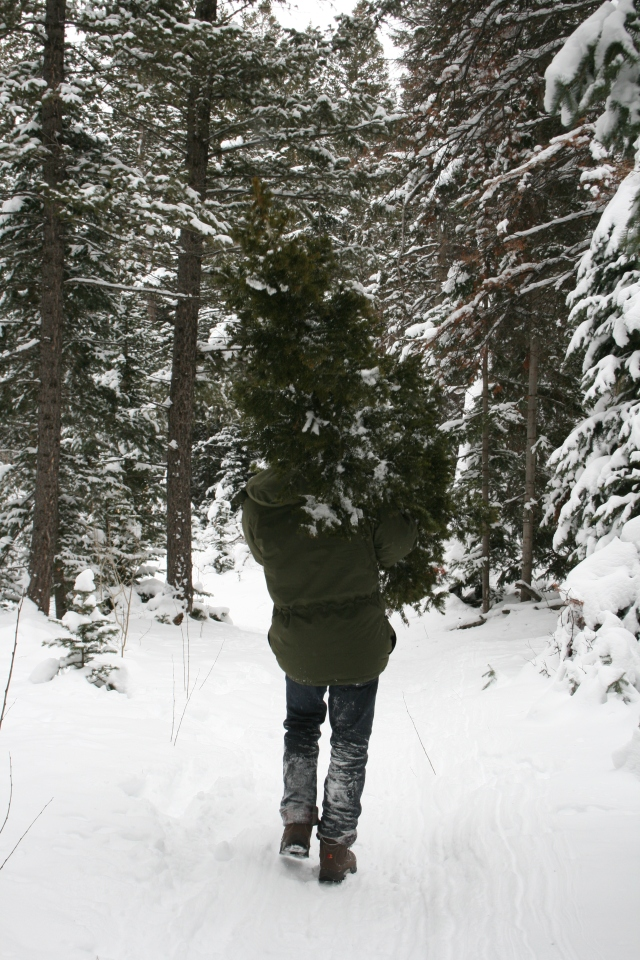 Matt carrying the tree