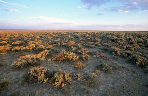 Sagebrush in Wyoming, photo by Getty Images