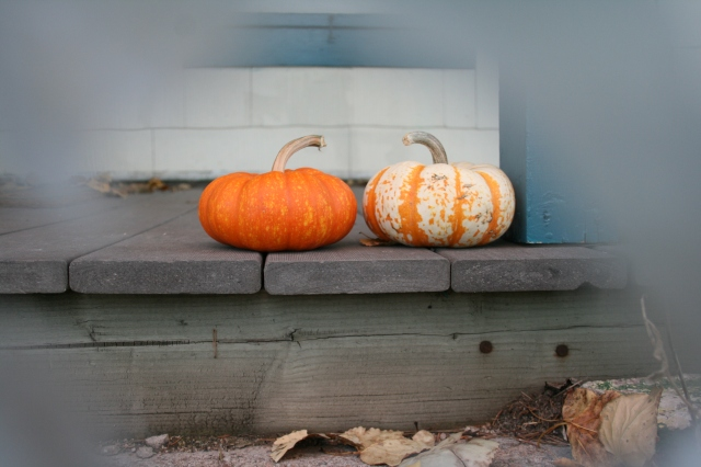 """I call this one, """"Pumpkins in Love,"""" obviously"""