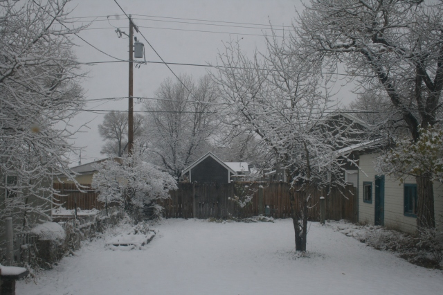 Our snowy backyard this afternoon