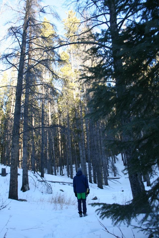 Matt in the forest