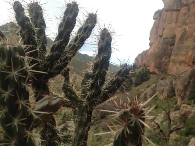 Cactus, the liar! My photo