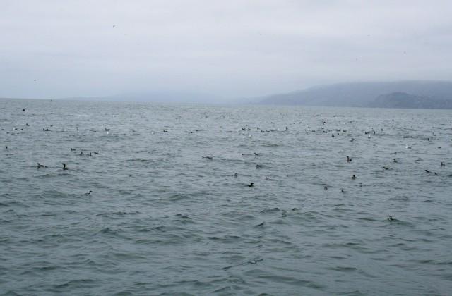 So many sea birds!