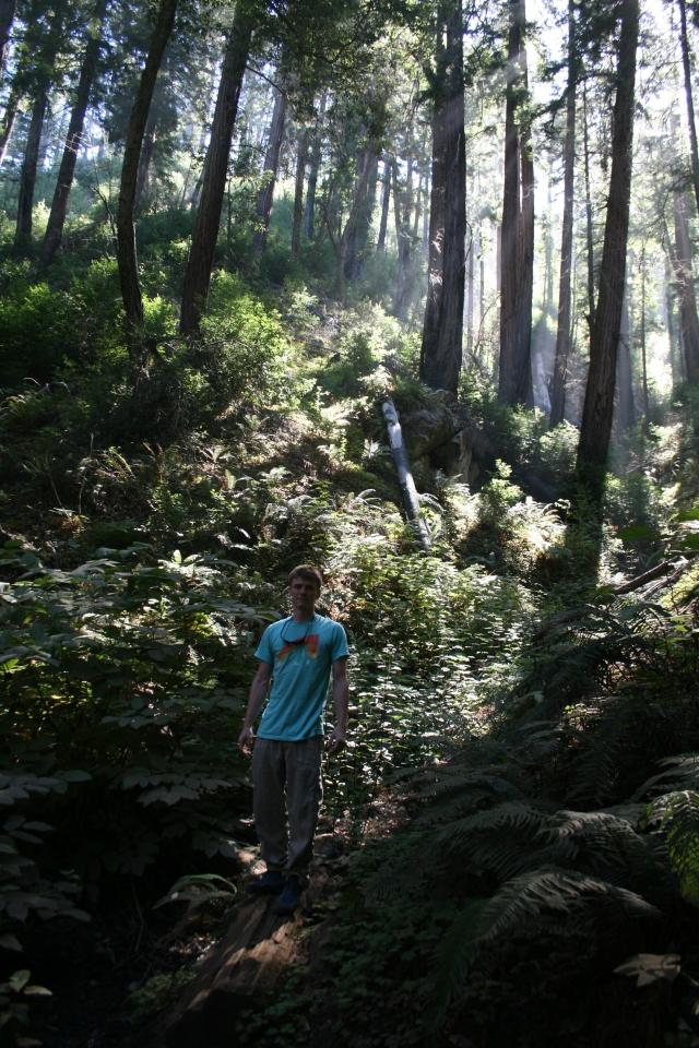 Matt in the redwood grove