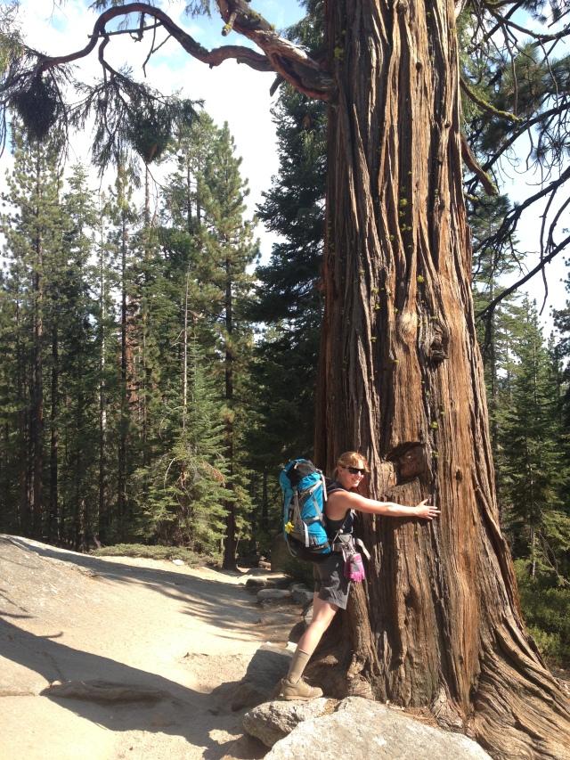 Gotta love those redwoods!